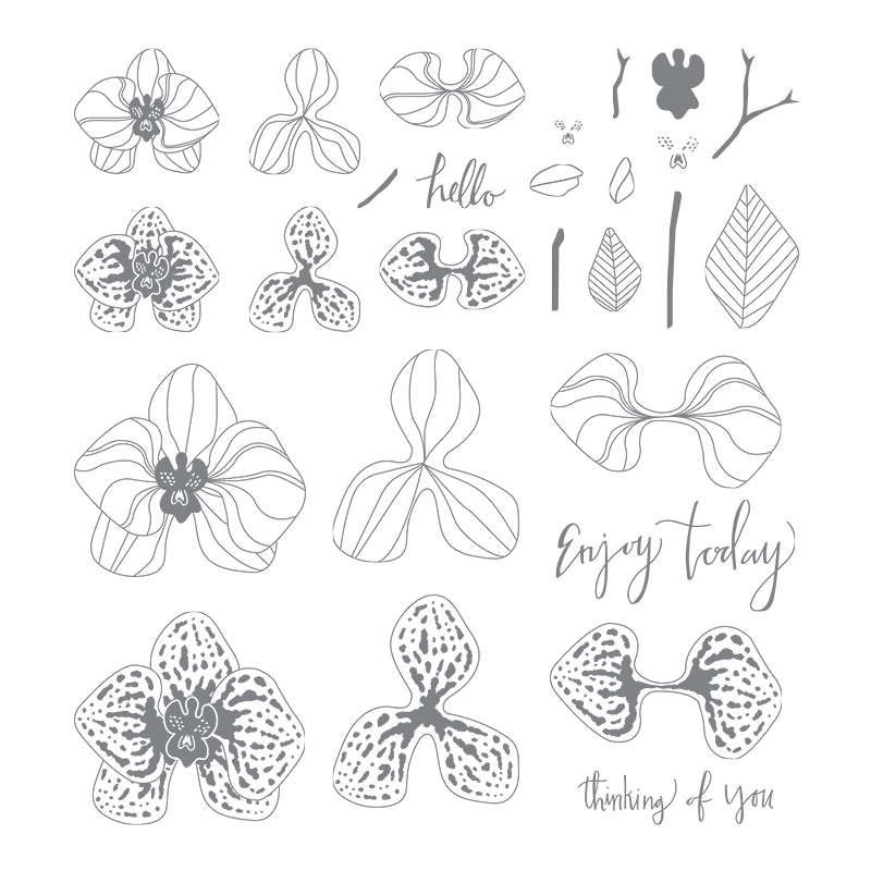Climbing Orchid Photopolymer Stamp Set
